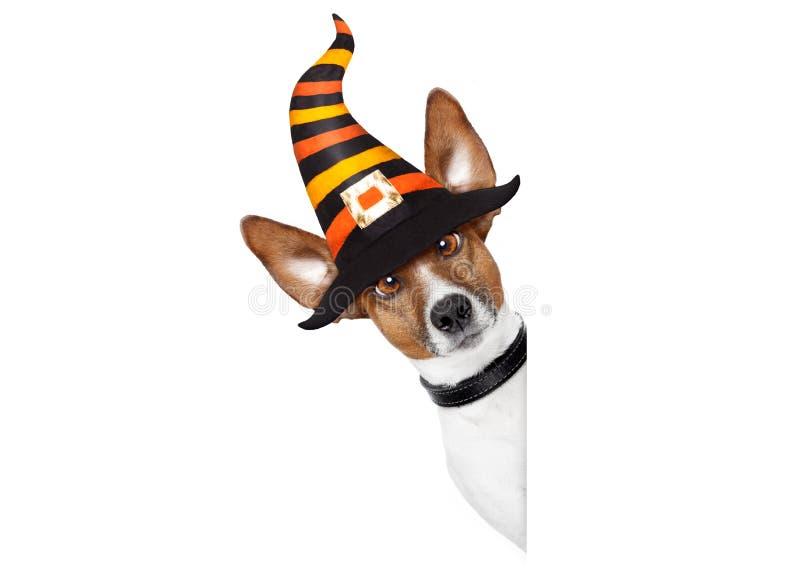 Halloween-Kürbishexenhund lizenzfreies stockfoto