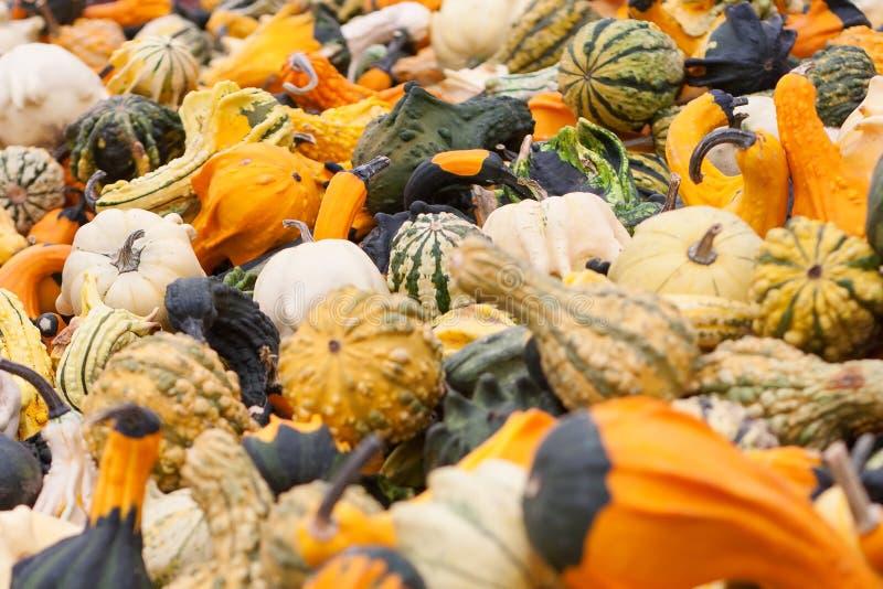 Halloween-Kürbisse lizenzfreies stockfoto