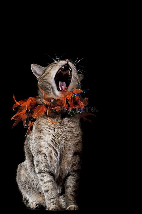 Halloween-Katze mit orange und schwarzem Kragen heulend stockfoto