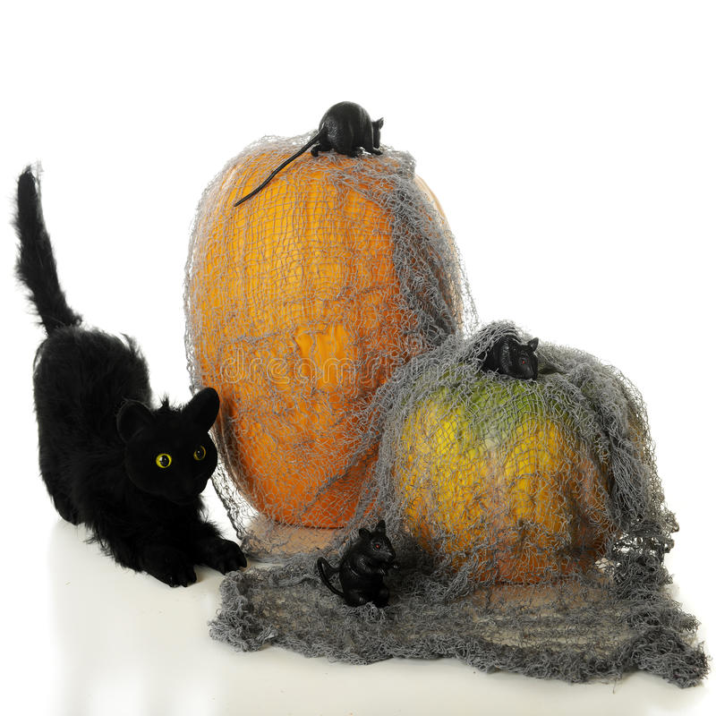 Download Halloween Mouse Hunt stock image. Image of white, mice - 26380497