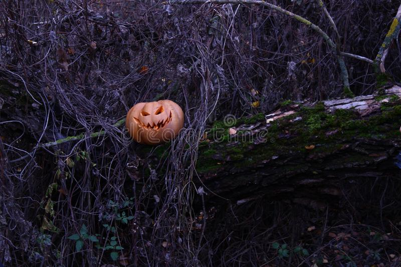 Halloween mystic pumpkin. Halloween mystical pumpkin hid in the thick of a dark forest royalty free stock image