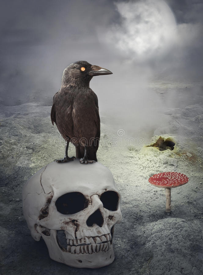 Halloween mystical background with crow on skull. Halloween mystical spooky background with crow on the skull stock images