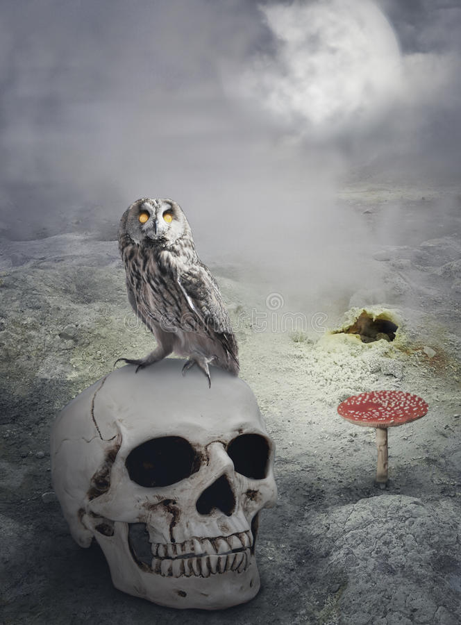 Halloween mystical background with owl on skull. Halloween mystical spooky background with owl on the skull royalty free stock images