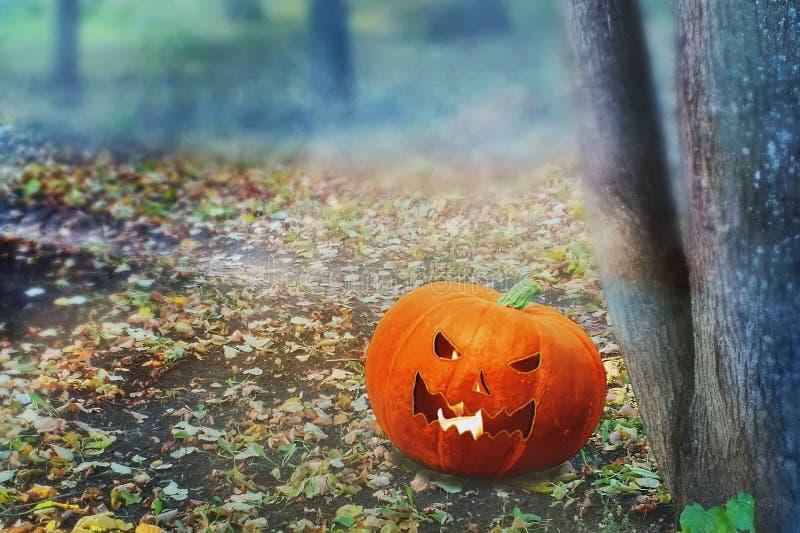Halloween Mystical Jack O Pompoenlantaarn in een broos bos Spooky Halloween poster Achtergrondbehangselpapier van Halloween met p royalty-vrije stock afbeelding