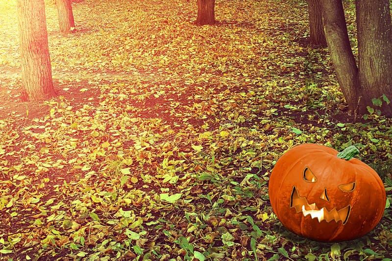 Halloween Mystical Jack O Pompoenlantaarn in een broos bos Spooky Halloween poster Achtergrondbehangselpapier van Halloween met p stock afbeeldingen
