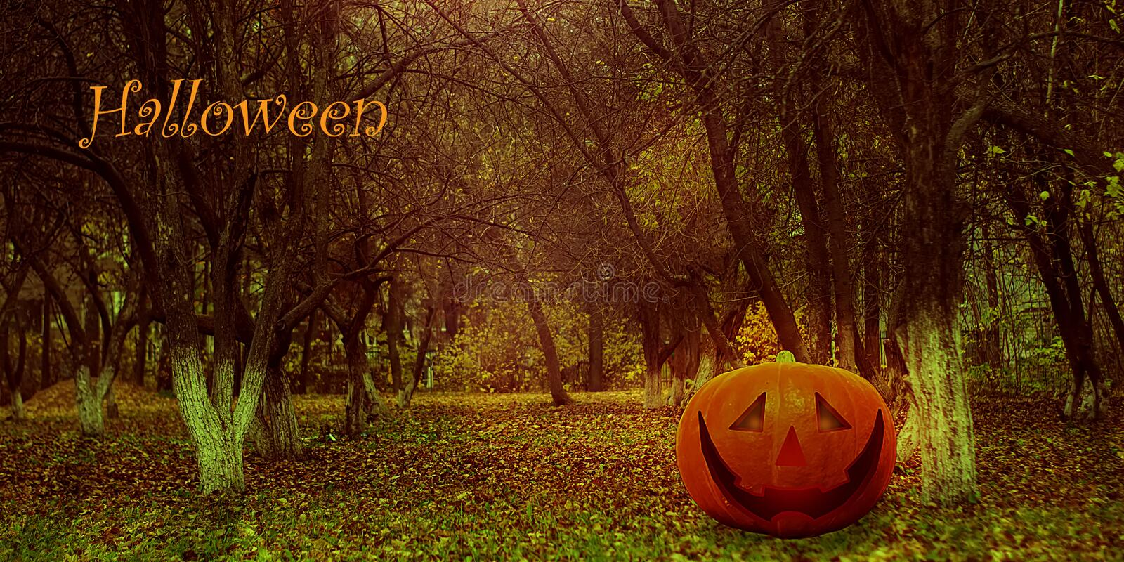 Halloween Mystical Jack O. Pumpkin Lantern in the Forest. Spooky Halloween Poster. Halloween background wallpaper with pumpkin. Jack lantern. The sinister eyes royalty free stock photography