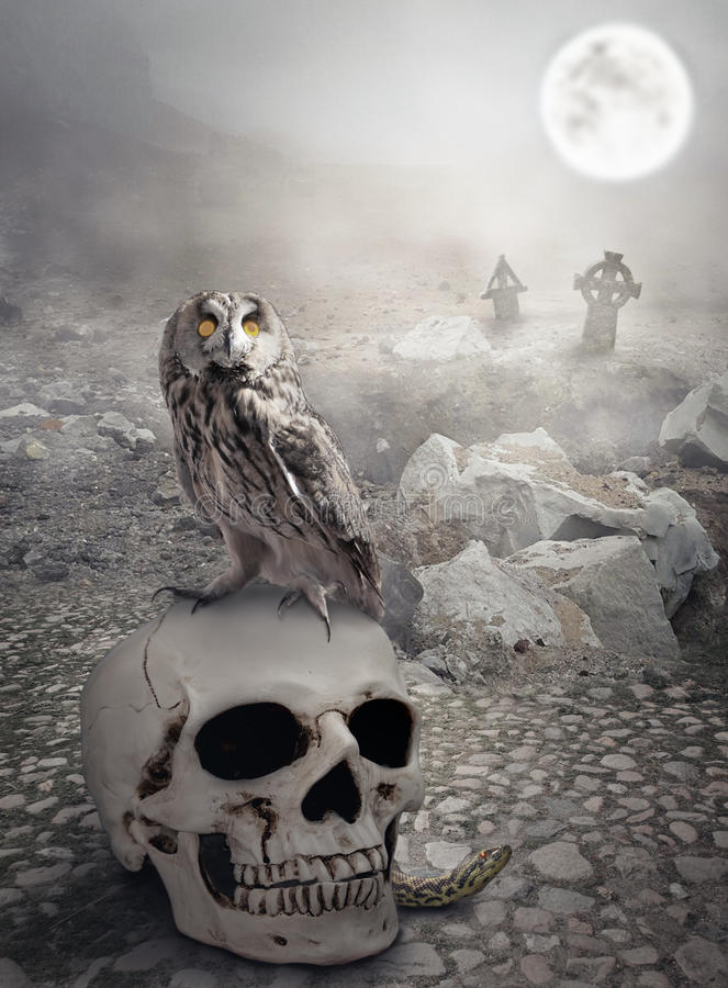 Halloween mystical landscape with skull and owl royalty free stock photography
