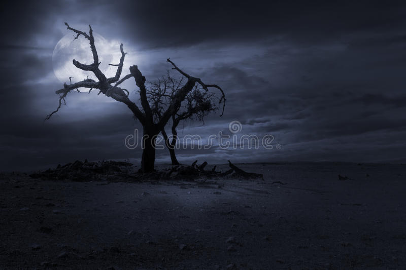 Halloween nght background. Spooky naked trees against a cloudy sky in a full moon night. Good as halloween background stock image