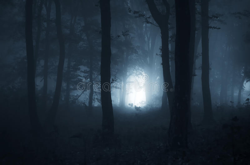Halloween night in a mystical forest royalty free stock images