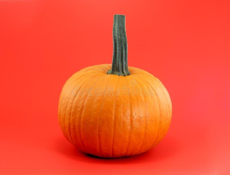 Halloween o calabaza anaranjada de la acción de gracias en fondo rojo imagen de archivo