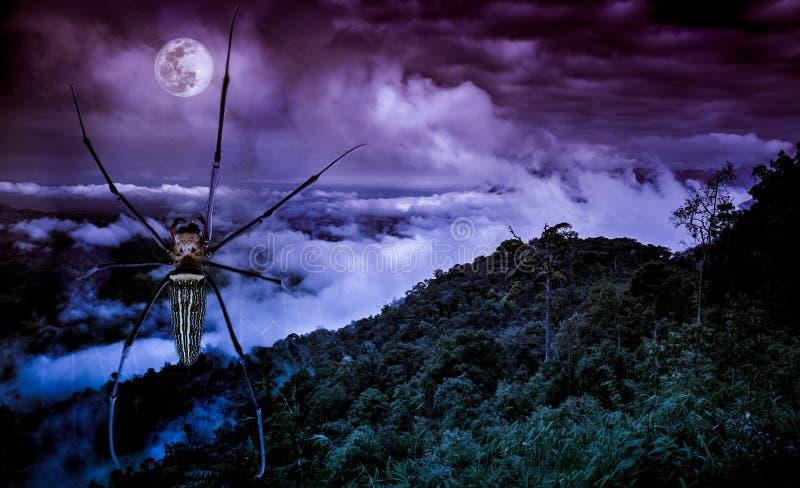 Halloween od tła blasku księżyca uwagi Zbliżenie pająk na spiderweb i świeżym gree zdjęcia stock