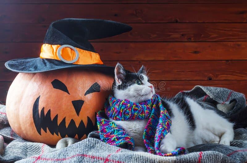 Halloween, orange Kürbis und Katze in einem Schal auf einem hölzernen backgro stockfotos