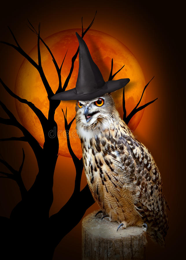 Free Halloween Owl With Hat Stock Image - 78319181