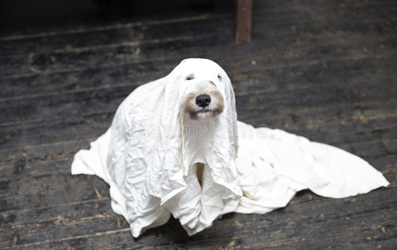 Halloween pies zdjęcia stock