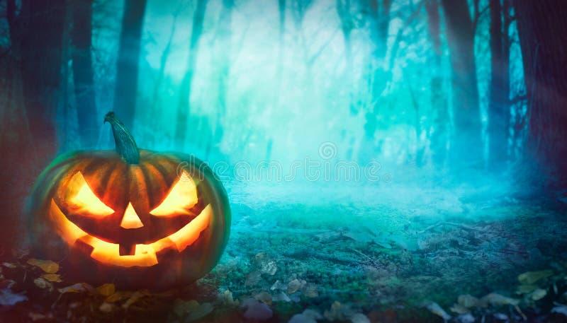 Halloween-pompoen in bos royalty-vrije stock fotografie