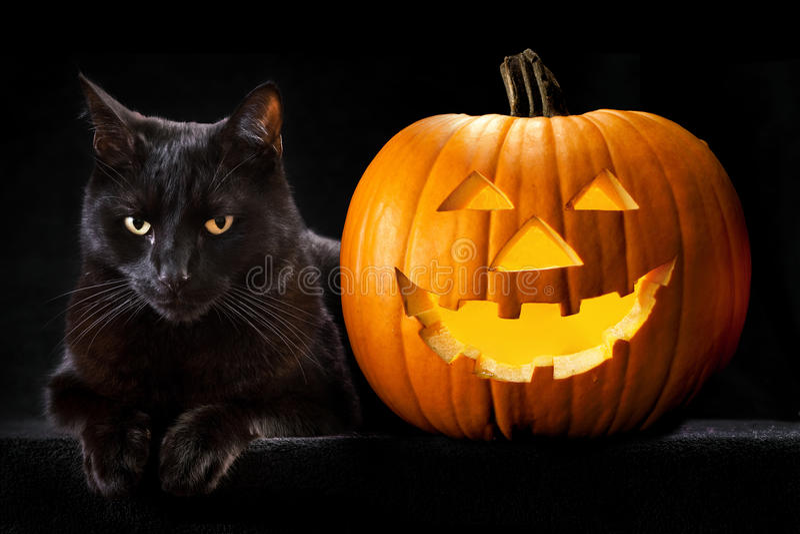 Download Halloween Pumpkin Black Cat Stock Image - Image of haunting, o: 27208795