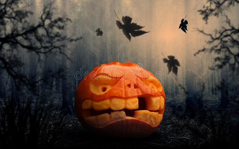 Halloween, Pumpkin, Calabaza, Jack O Lantern royalty free stock photo