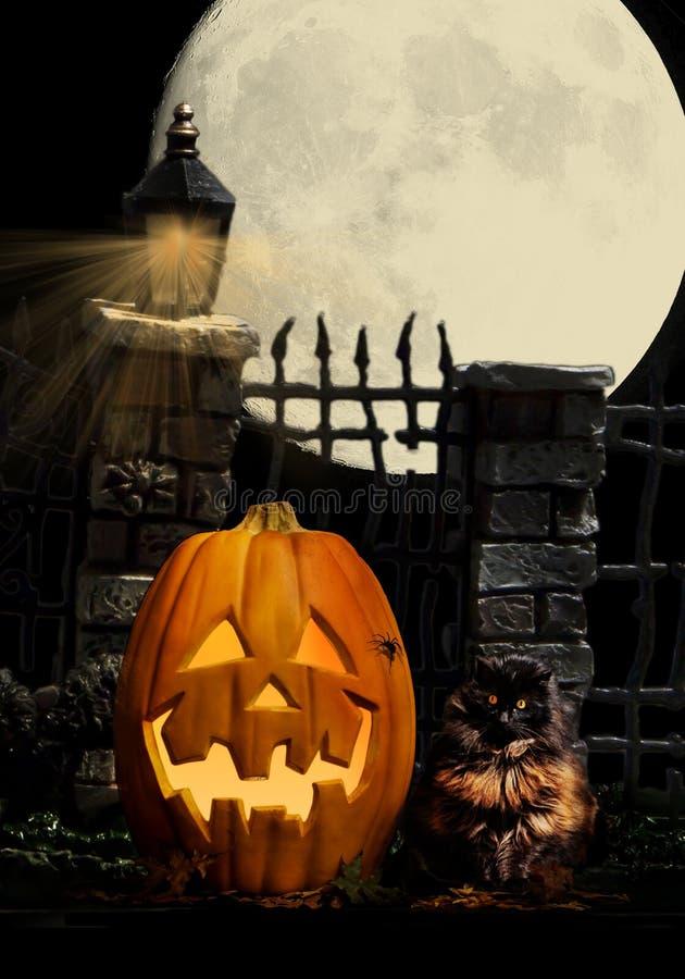 Halloween Pumpkin Cat Spider royalty free illustration