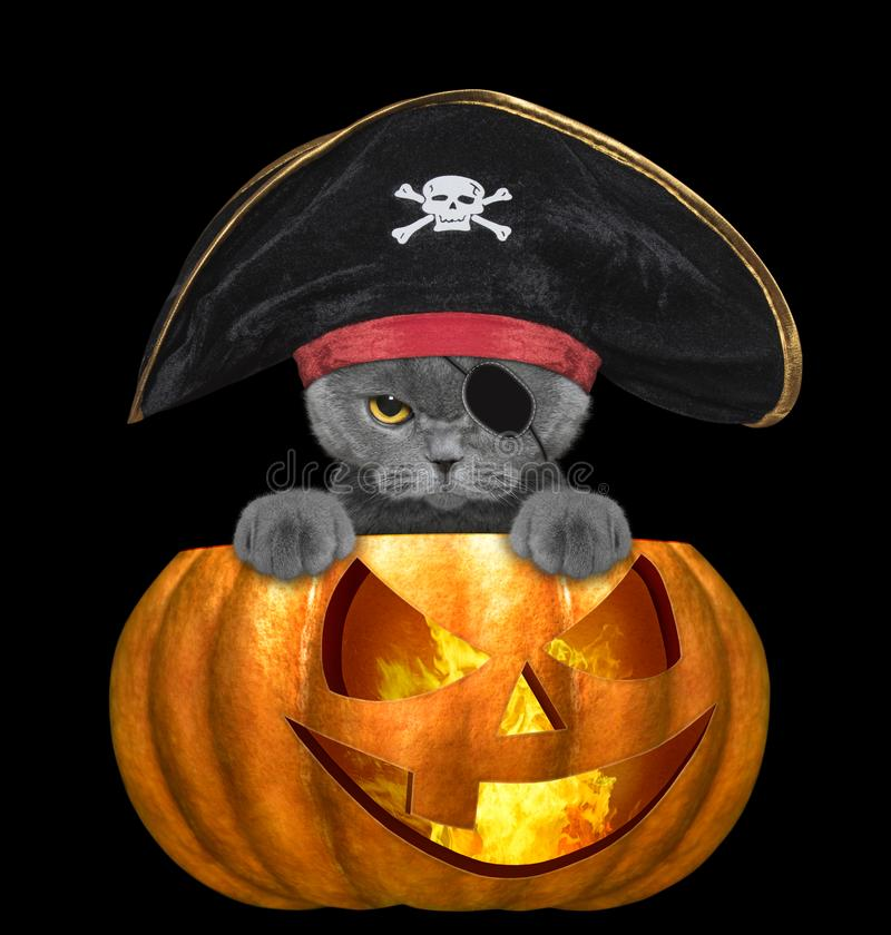 Halloween pumpkin with cute cat in pirate costume - isolated on black stock photos