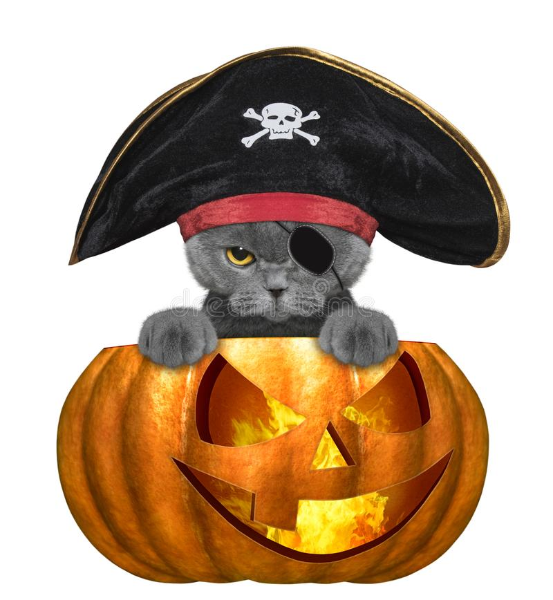 Halloween pumpkin with cute cat in pirate costume - isolated on white vector illustration