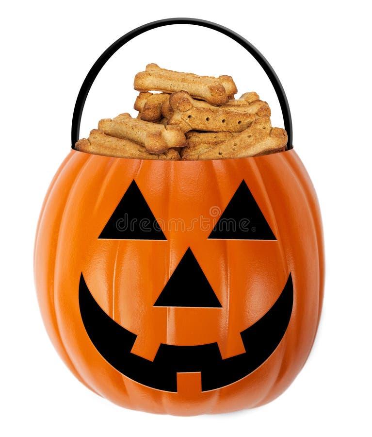 Halloween Pumpkin Dog Treat Holder royalty free stock photo
