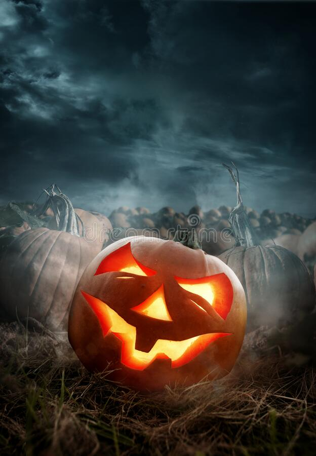 Free Halloween Pumpkin Field With A Grinning Jack O Lantern Stock Images - 198227654