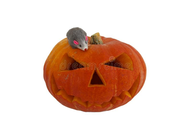 Halloween pumpkin with funny rat isolated on white background. Jack lantern from juicy pumpkin. rat symbol of new year.  stock images