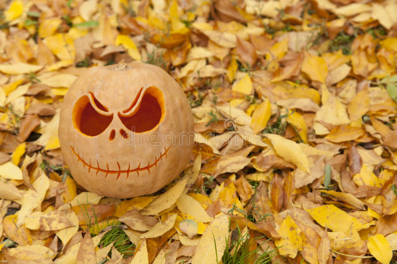 Halloween pumpkin on golden leaves royalty free stock photo