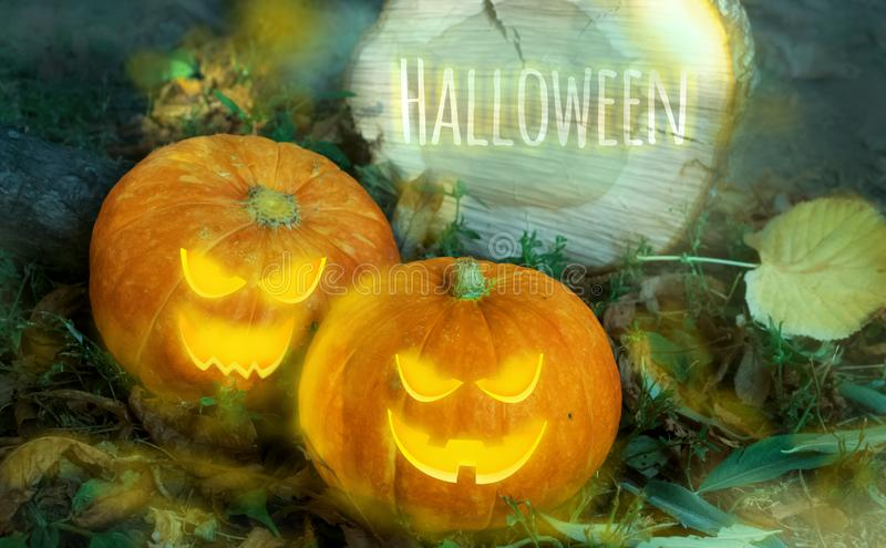 Halloween pumpkin on the ground at night in a mystical forest. Halloween background. Sinister eyes of pumpkins. Halloween party. royalty free stock photo