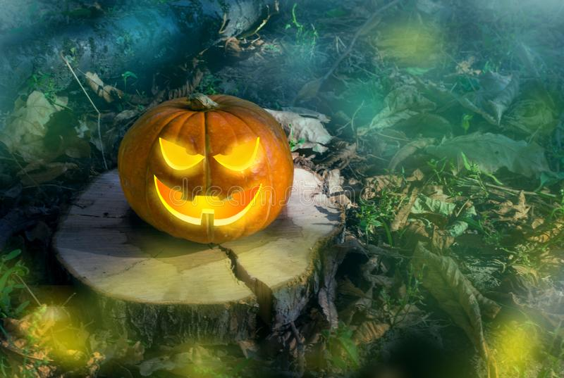 Halloween pumpkin on the ground at night in a mystical forest. Halloween background. Sinister eyes of pumpkins. Halloween party. Autumn festival. Magic. The royalty free stock images