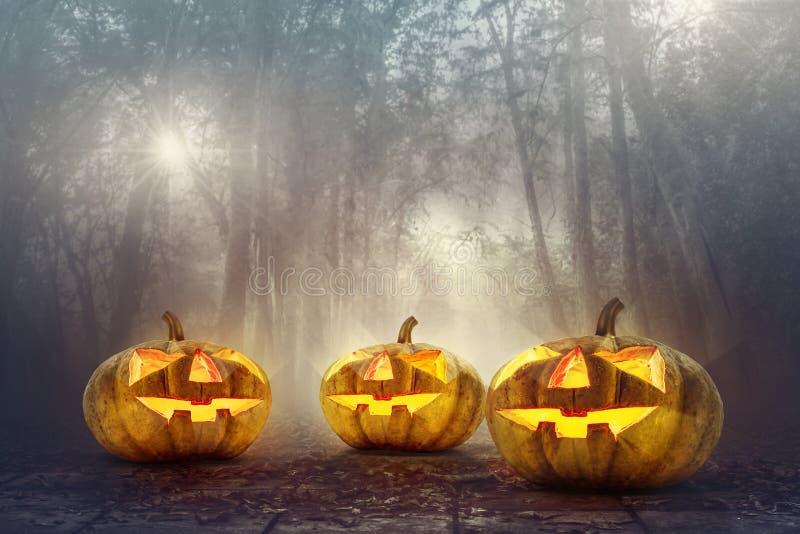 Halloween pumpkin head in spooky woods background. Halloween background stock photo