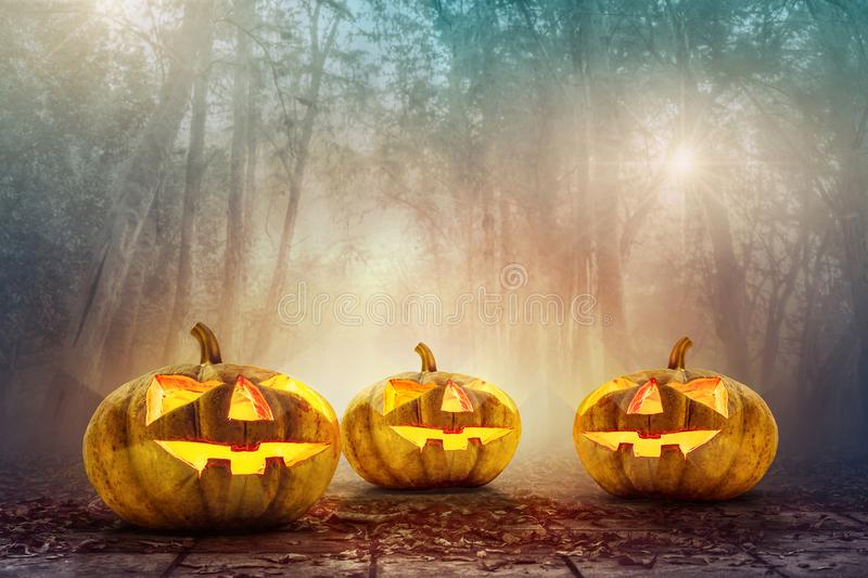 Halloween pumpkin head in spooky woods background. Halloween background royalty free stock image