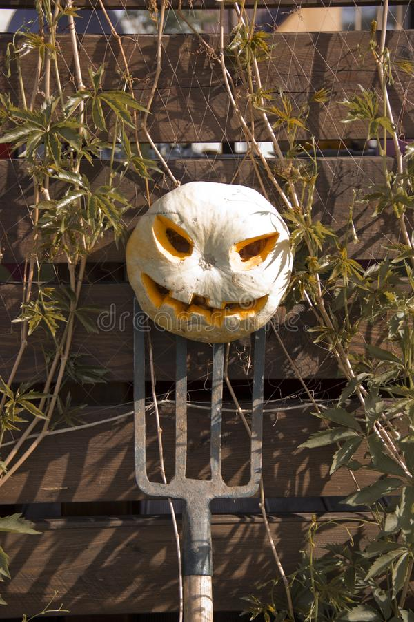 Halloween pumpkin  jack lantern on a pitchfork royalty free stock photo