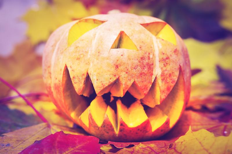 Halloween pumpkin lantern with dry leaves with autumn background. royalty free stock photos