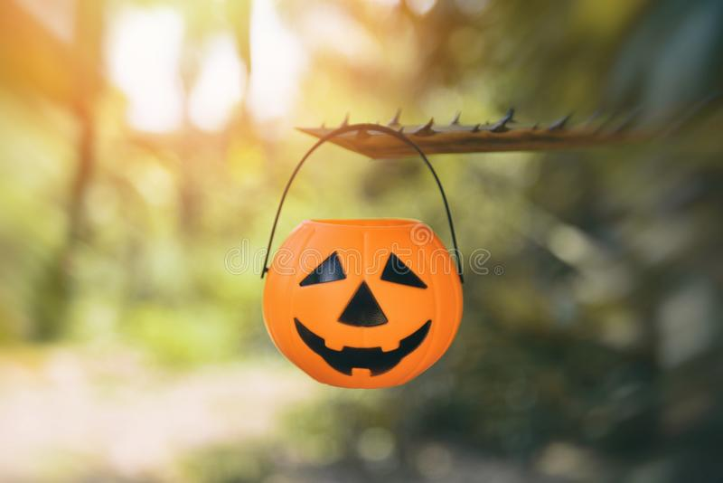 Halloween pumpkin lantern hanging on the branch tree / head jack o lantern evil faces spooky holiday decorate on halloween blur stock photos