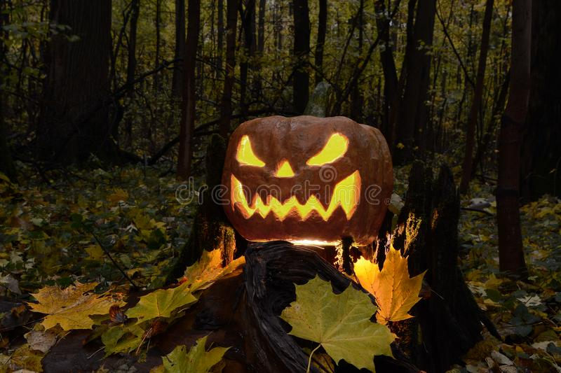 Halloween pumpkin lantern with a terrible face. In a dark forest on a stump stock image