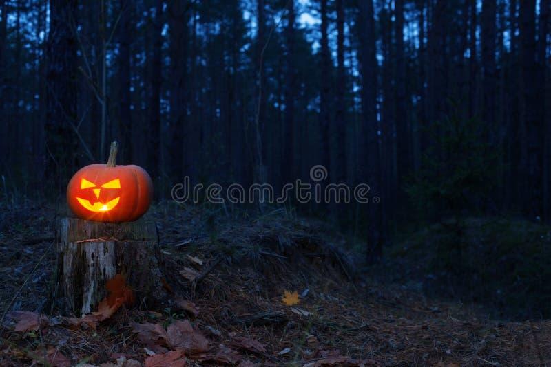 Halloween pumpkin in night forest stock photo