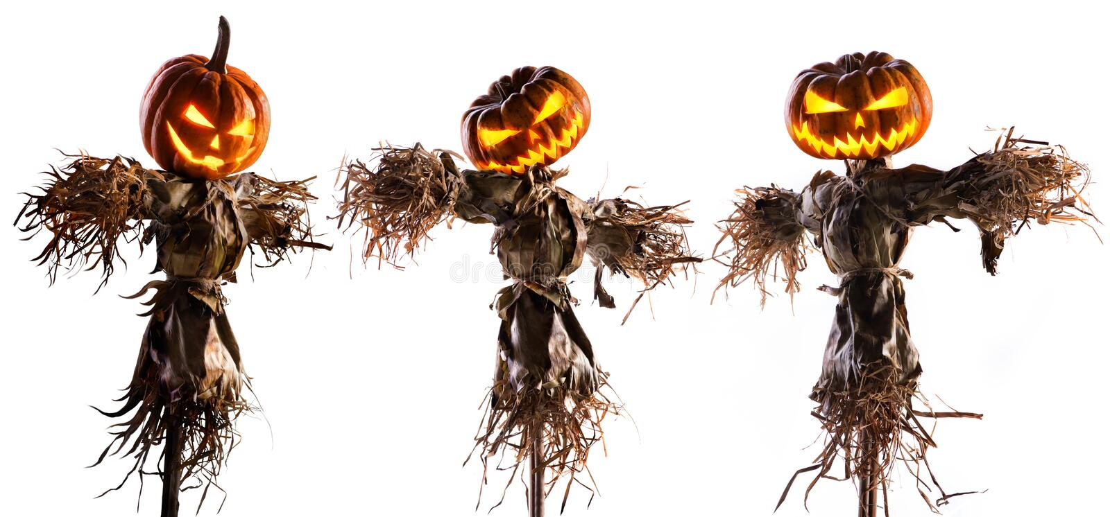 Halloween pumpkin scarecrow isolated on white background royalty free stock photo