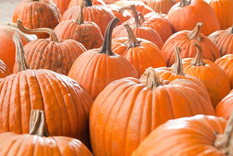 Download Halloween pumpkins stock image. Image of october, gourd - 16313407