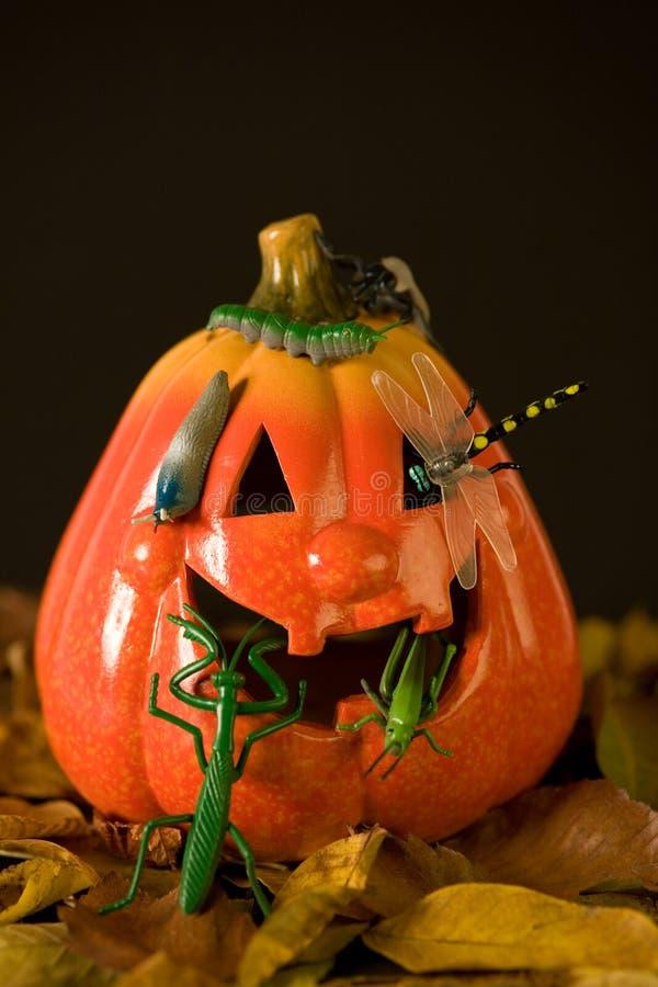 Free Halloween Pumpkins And Bugs Stock Photos - 3213313