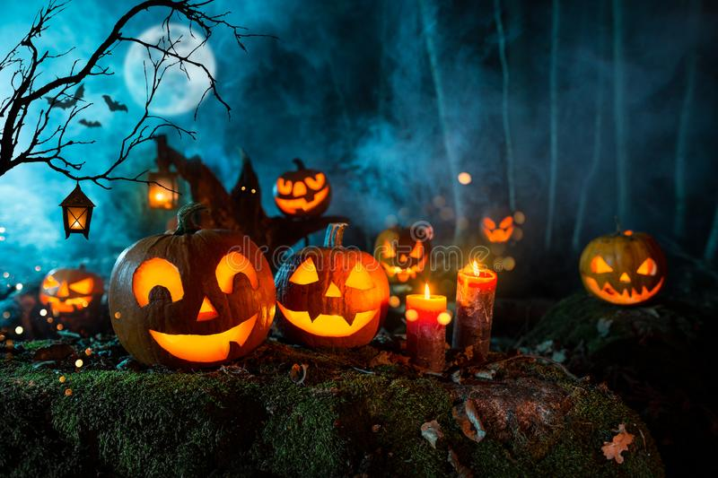 Halloween pumpkins on dark spooky forest. royalty free stock photography