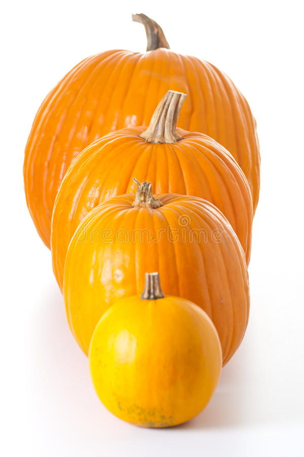 Download Halloween Pumpkins Isolated Stock Photo - Image of november, pumpkin: 16313554