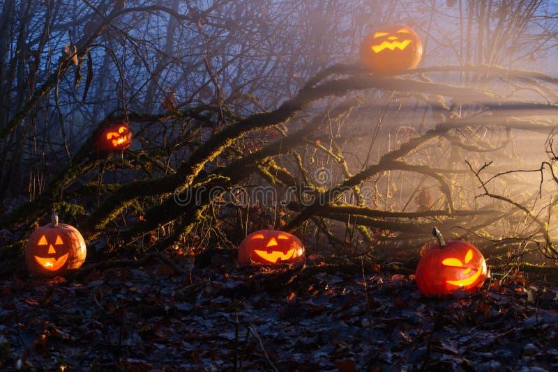 Halloween pumpkins in night forest. Halloween pumpkins in mystic  night forest royalty free stock photography