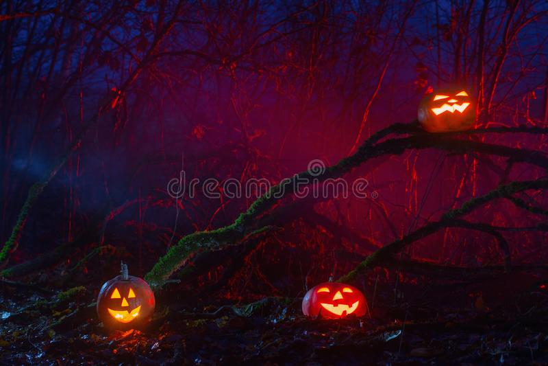 Halloween pumpkins in night forest. Halloween pumpkins in mystery night forest stock photography