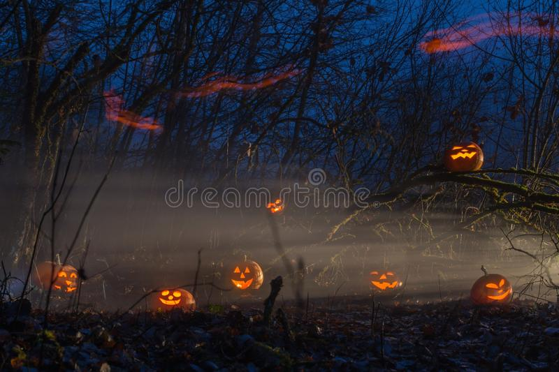 Halloween pumpkins in night forest. The Halloween pumpkins in night forest stock photo
