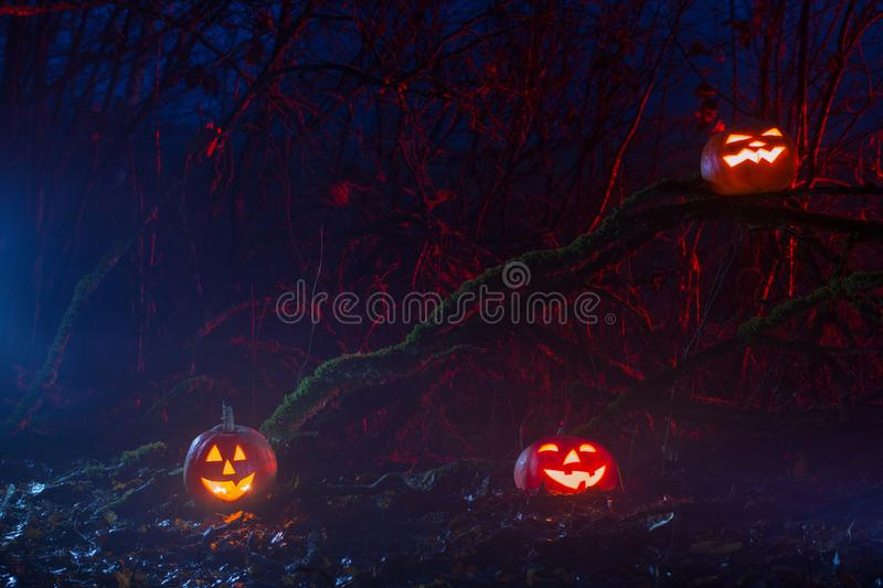 Halloween pumpkins in night forest. The Halloween pumpkins in night forest stock photos
