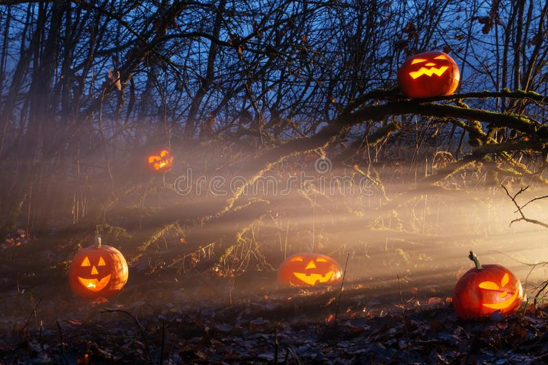 Halloween pumpkins in night forest. The Halloween pumpkins in night forest royalty free stock photos