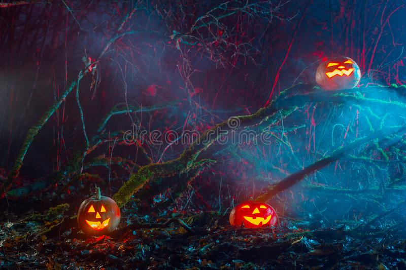 Halloween pumpkins in night forest. The Halloween pumpkins in night forest royalty free stock image