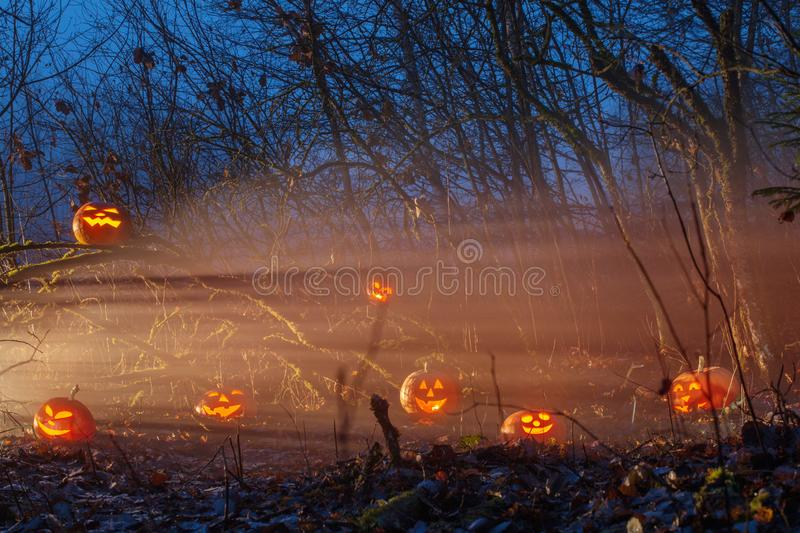 Halloween pumpkins in night forest. The Halloween pumpkins in night forest stock images