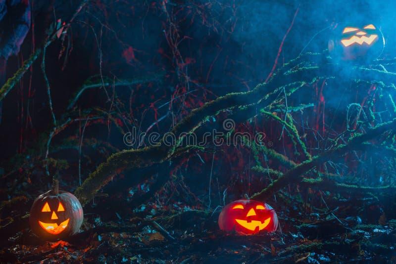 Halloween pumpkins in night forest. Halloween pumpkins in night magic forest stock photography